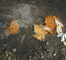 Leaves in the River by AJBPhotography