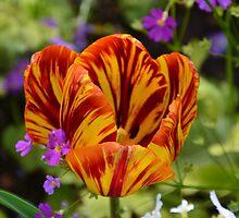 Tiger Stripes by Deborah Clearwater