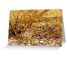 Bunny in a Dogwood Greeting Card