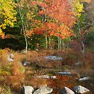 Autumn in the Poconos by Imagery