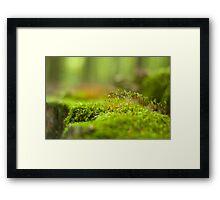 Green moss close-up Framed Print