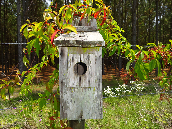 Roadside Birdhouse by Patricia Mills