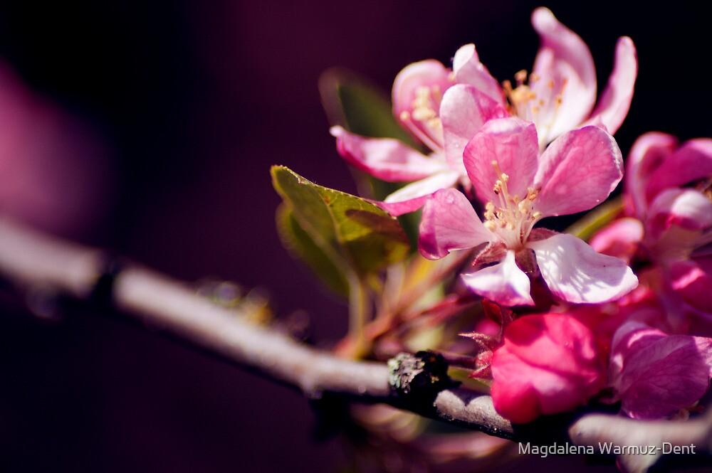 Blossom by Magdalena Warmuz-Dent
