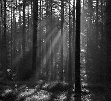 A New Day by Irina Chuckowree