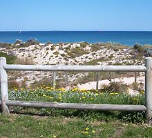 Brighton Beach Fence Line In Spring by Robert Phillips