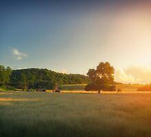 Sunset Landscape by cinema4design
