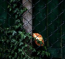 Autumn Messenger by patjila