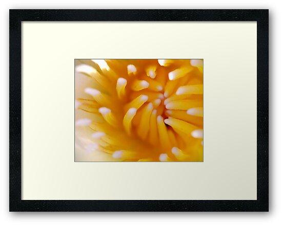 Flower in Macro by Leon Heyns