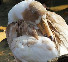 Let Sleeping Ducks Lie by Monnie Ryan