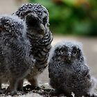 Ugly Beautiful - Three Baby Owls by Daisy-May