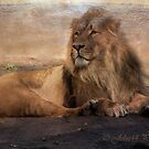 Animal world in textures  by John44