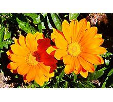 Orange Flower.......!! Photographic Print