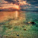 Starfish sunset by Chris Brunton