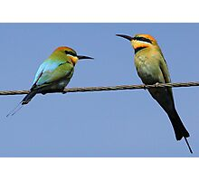 Pair of Rainbow Bee-eaters Photographic Print