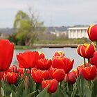 Red tulips by the lake by Derek Andersen Photography