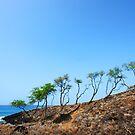 On a Rock by Ticker