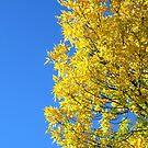 Treasure In a Deep Blue Sky by Sandra Fortier