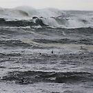 Tasmania waves and birds by gaylene