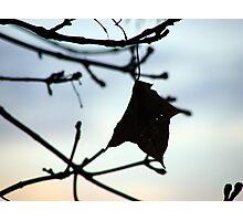 Autumn Charm Photographic Print