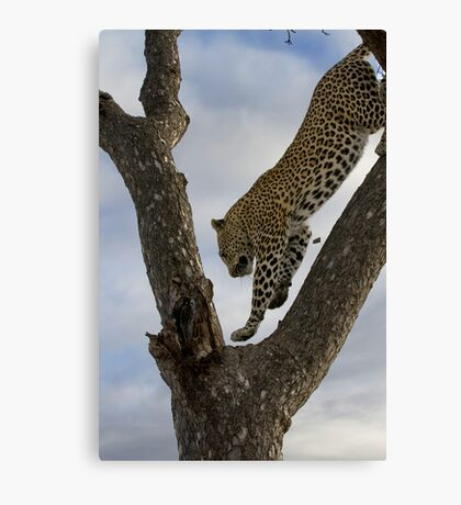 Look Ma, I Can Fly Canvas Print