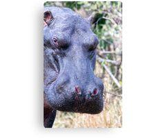 The Hippo Glance Canvas Print