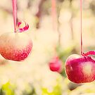 Apples by Carol Knudsen