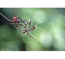 Rhododendron Seed Macro Photographic Print
