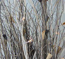 Karyn Crimmin's 'Brushwood' by Art 4 ME