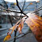 Last of Autumn by Joanne Piechota