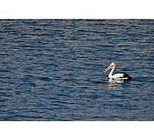 Wivenhoe Dam Pelican Photographic Print