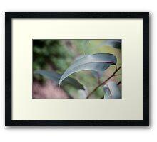 gum leaf Framed Print