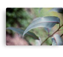 gum leaf Canvas Print