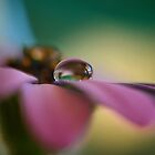 Purple Daisy Droplet by Kymie