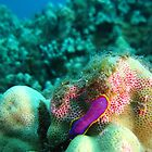 Color on Coral by jaydan80