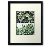figtree diptych Framed Print