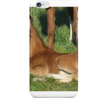 Sunshine  Foal iPhone Case/Skin