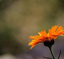 Beautiful looking flower by Ben Osborne