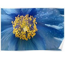 Three flowers: Blue - Reflecting the sun in the sky, petals of rain mourn forgotten memories Poster