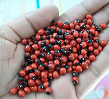 Seeds of the Gunj Plant by S S.