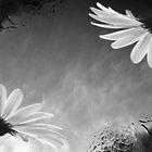 Pigeons & Flowers by B O J O N G