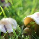 Mushroom Macro by Astrid Ewing Photography