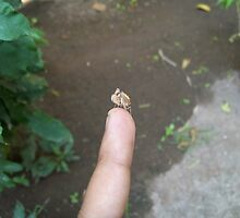Mantis Baby.. by Sushikant S.
