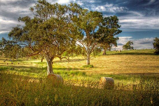 Roll in the Hay, Mt Torrens, SA, Australia