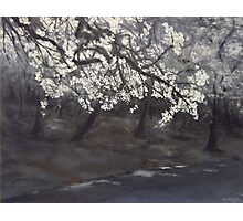 Blossom on a thundery day  Photographic Print