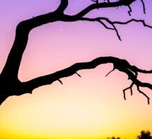 Tree At Sunset Sticker