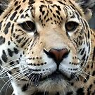 Jaguar by JenniferLouise