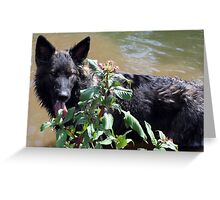 Cool off on a hot day  Greeting Card
