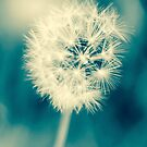 *Dandelion Blue by GoldenRectangle