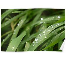 water drops on a blade of grass Poster