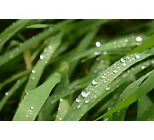 water drops on a blade of grass Photographic Print